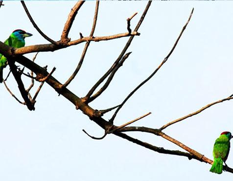 Actual site photograph, Godrej Prakriti, Kolkata